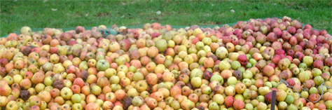 Quellle quantité de pommes et fruits faire presser ?