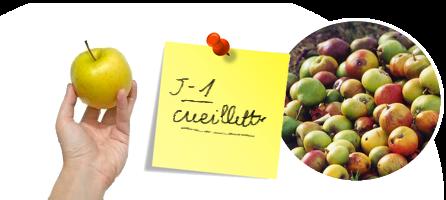 Quand cueillir vos fruits destinés au pressage ?
